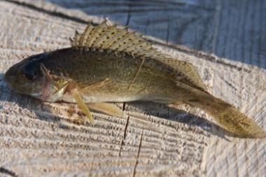 Leidimus žvejybai bus galima įsigyti mobiliuoju telefonu?