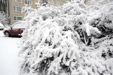 Per savaitgalį Lenkijoje mirtinai sušalo 13 žmonių