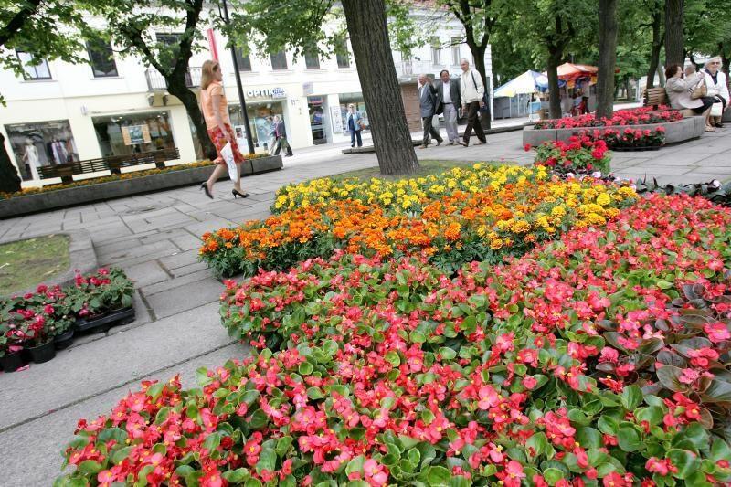 Verslininkai kviečia kauniečius miestui padovanoti savo gėlę