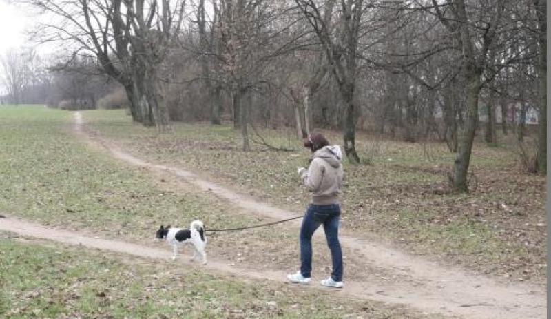 Klaipėdietė: tiek šunų išmatų miesto centre dar nesu regėjusi!
