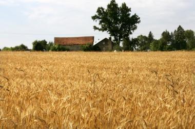 Prasidėjo visuotinis žemės ūkio surašymas