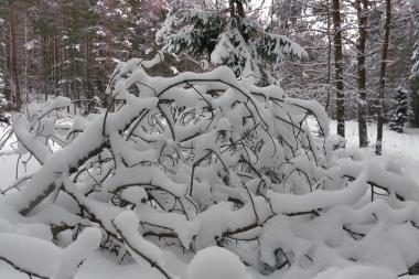 Gismeteo.ru: ketvirtadienį Vilnių užklups pūga