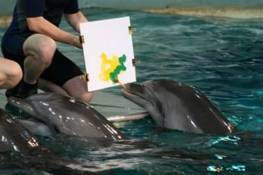 Rygoje – delfinų piešinių paroda