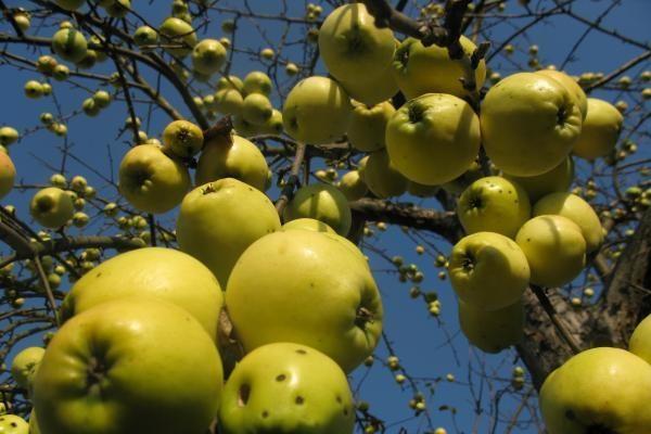 Standartus atitinkantiems ekologiniams ūkiams teikiama parama