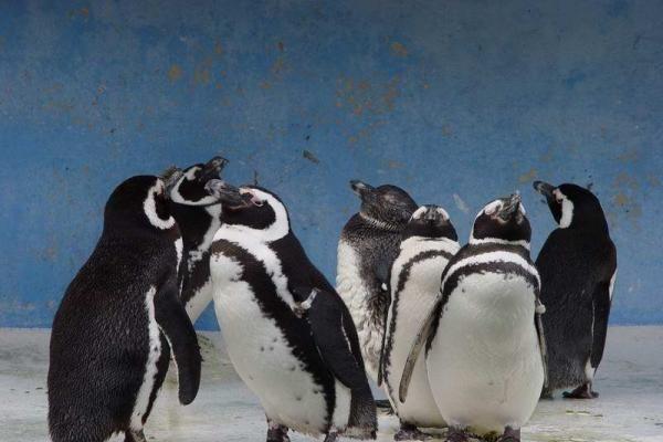 Antarktidos samanas maitina senovės pingvinų išmatos