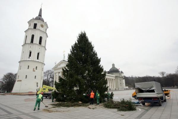 Pagrindinė šalies Kalėdų eglė virs biokuru