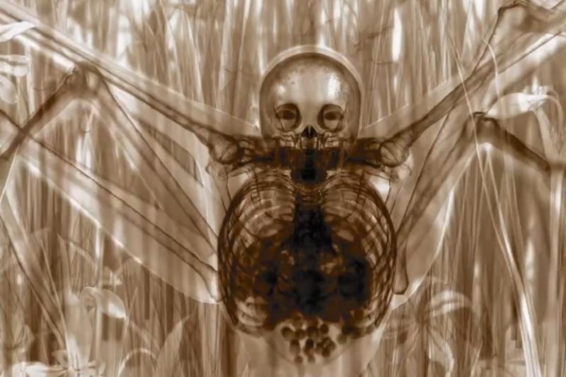 Provokacija: kaip žmogus-voras atrodytų realybėje?
