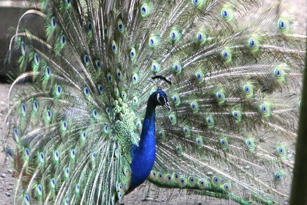 Vingio parką išgelbėtų žirgynas ir zoologijos sodas