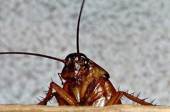Apklausa: JAV Kongresas mažiau populiarus už tarakonus ir utėles