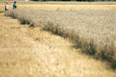 Estijos ūkininkams padeda moderniosios technologijos