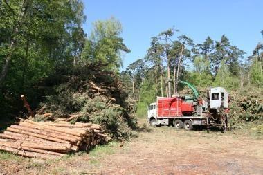 Raginama atšaukti supaprastintą miškų kirtimo tvarką škvalo nusiaubtuose rajonuose
