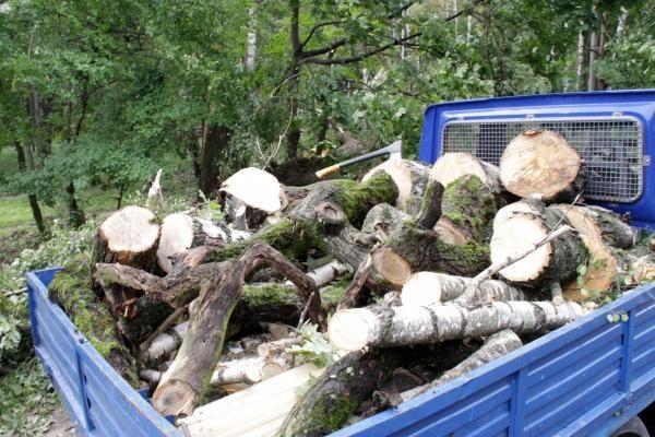 Generalinis miškų urėdas žada škvalo padarinius sutvarkyti iki balandžio