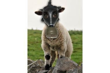 Australijoje avys nešios dujokaukes