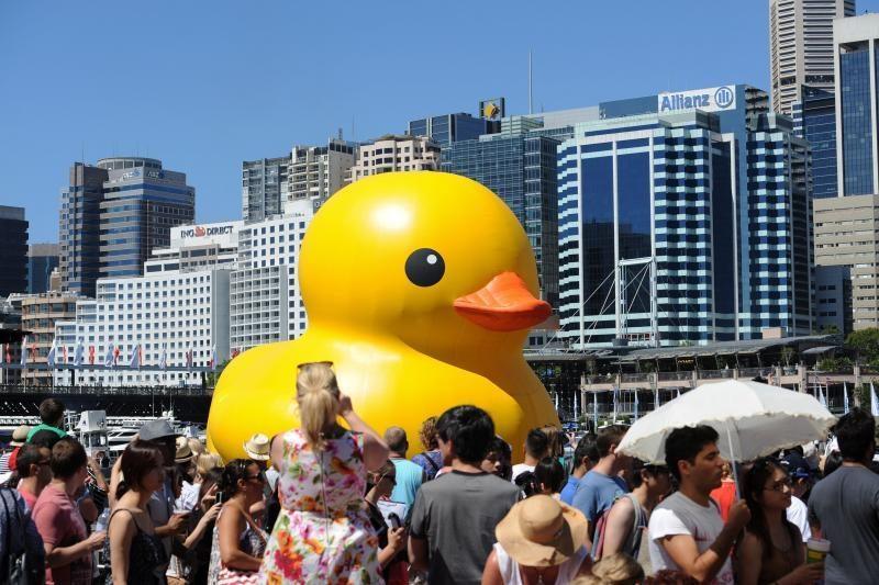 Sidnėjaus meno festivalį atidarė milžiniškas guminis ančiukas