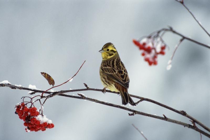 Ornitologai: iškritus sniegui, laikas pasirūpinti paukščiais