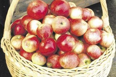 Už lietuviškus obuolius teks mokėti daugiau