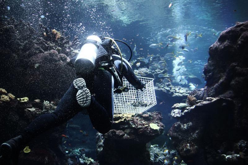Vandenynai rūgštėja greičiausiai per 300 mln. metų