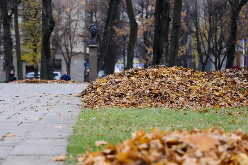 Medžių lapai turės supūti ten, kur nukrito – niekas jų neišveš