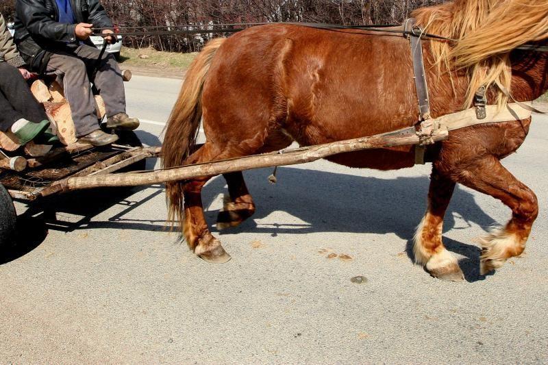 Nuo skardžio nuriedėjus vežimui, arklys įstrigo tarp medžių