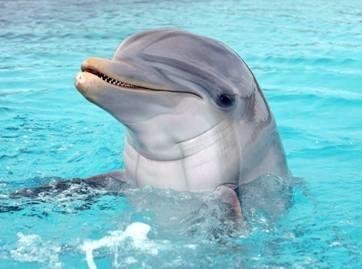 Padovanok delfinui šypseną