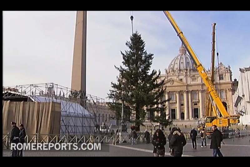 Vatikano pagrindinėje aikštėje iškilo Kalėdų eglė