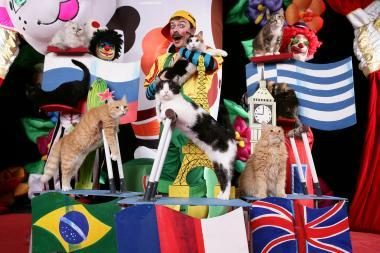 Vietoj Afrikos cirko linksmins katės