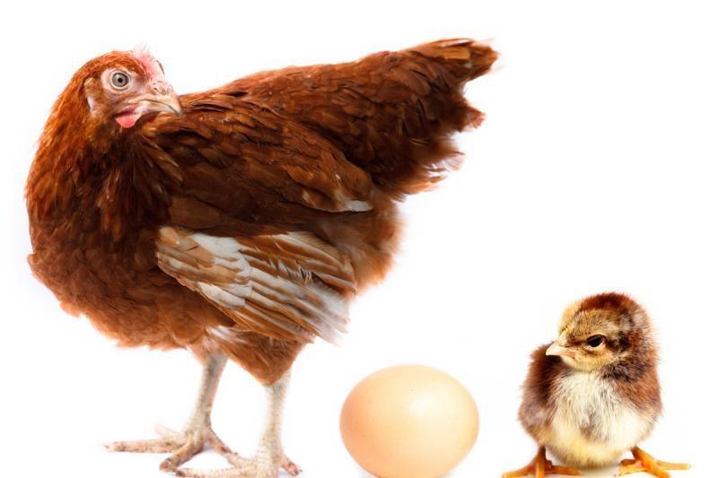 Sukurtas aštriausias pasaulyje velykinis kiaušinis