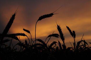 ES parama jauniesiems ūkininkams: būtina vykdyti įsipareigojimus