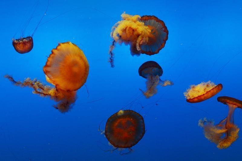 Australija kuria didžiausią jūrų rezervatą
