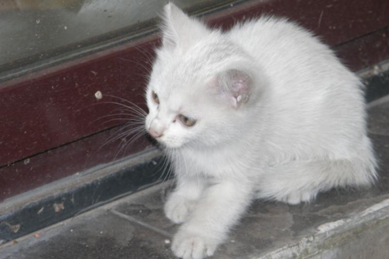 Gamtininkas: naminės katės naikina natūralias ekosistemas
