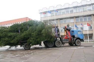 Prie rajono savivaldybės įžiebs Kalėdų eglutę