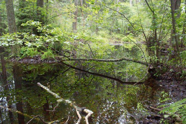 Nuniokotų miškų savininkai gali tikėtis 8,3 mln. litų ES paramos