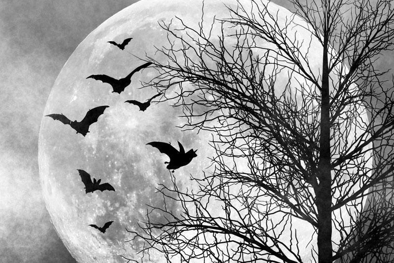 Astrofotografas užfiksavo nuostabų mėnulio tekėjimą