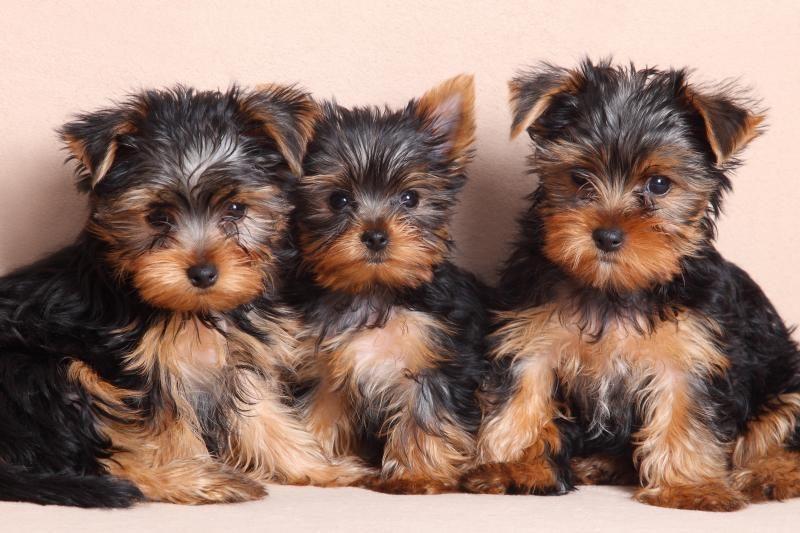 Dėl žiauraus elgesio iš Garliavos gyventojo konfiskuota 11 šunų
