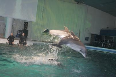 Delfinams – žmonių parama