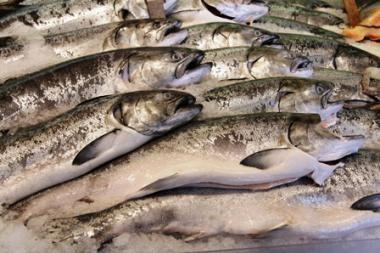 Šaldytų žuvų negavę verslininkai kaltina ir airius, ir klaipėdiečius