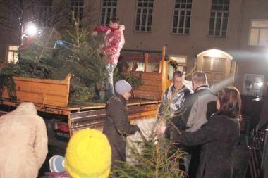Kalėdinės eglutės šildys vilniečių būstus