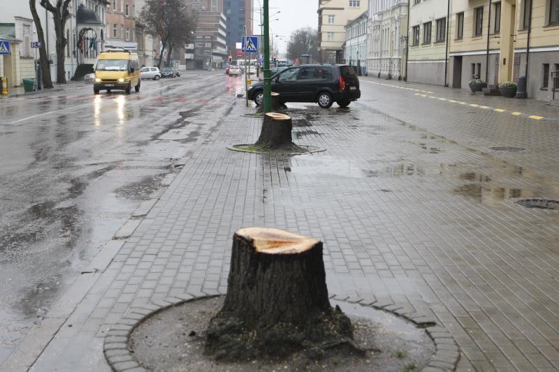 Liepų    gatvė   liko  be liepų alėjos