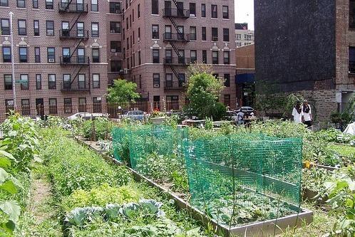 Vilnietis mieste kviečia auginti daržoves