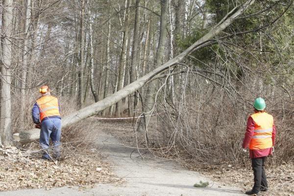 Klaipėdos poilsio parke virsta medžiai