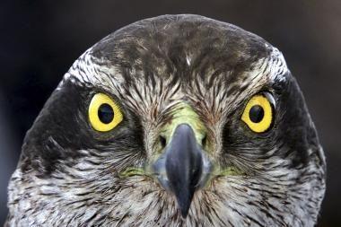 Pasaulyje sparčiai nyksta paukščiai