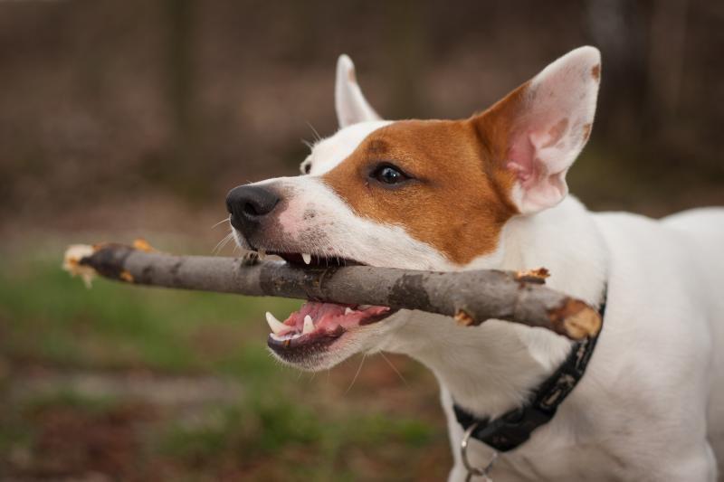 Sostinėje – kursai pavojingų šunų savininkams