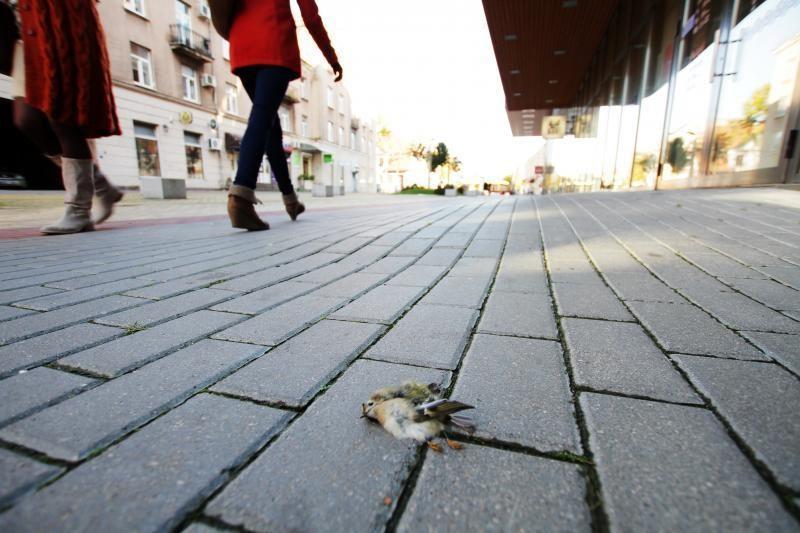 Klaipėdos savivaldybė: gelbėkime nykštukus (foto)