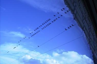 Verkių regioniniame parke - paukščių palydos