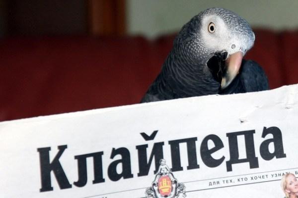 """Atnaujinta dienraščio """"Klaipėda"""" leidyba rusų kalba"""