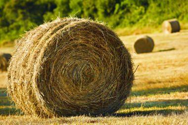 Už žemę kompensuos šimtus kartų pigiau nei rinkos kaina