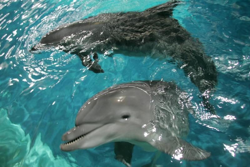 """Banginių stebėtojus nustebino įspūdingas delfinų """"šokis"""""""