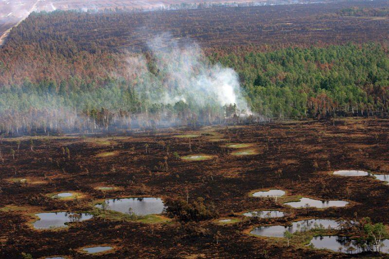 Traksėdžiuose baiminamasi miško gaisro
