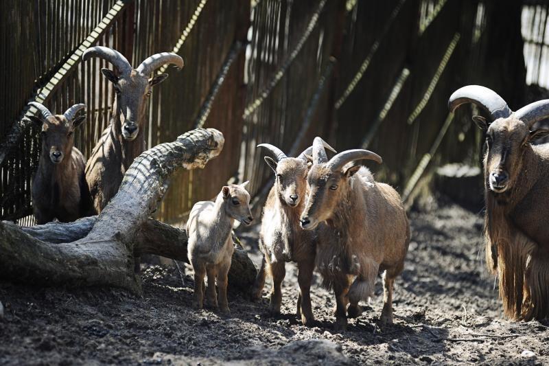 Kauno zoologijos sodas pašalintas iš tarptautinės organizacijos