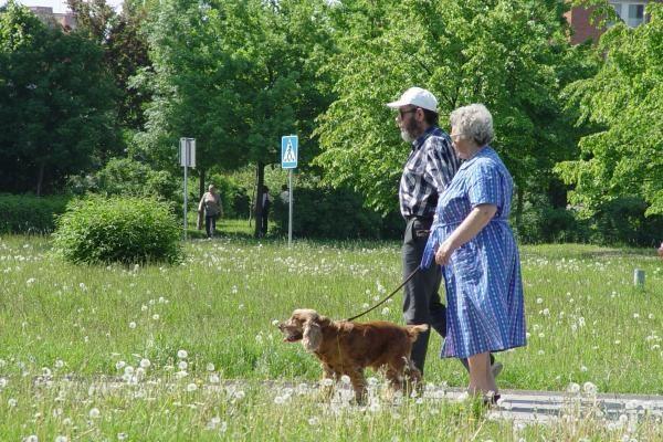 Klaipėdos valdžios idėja: kiekviename kieme – aikštelė šunims tuštintis